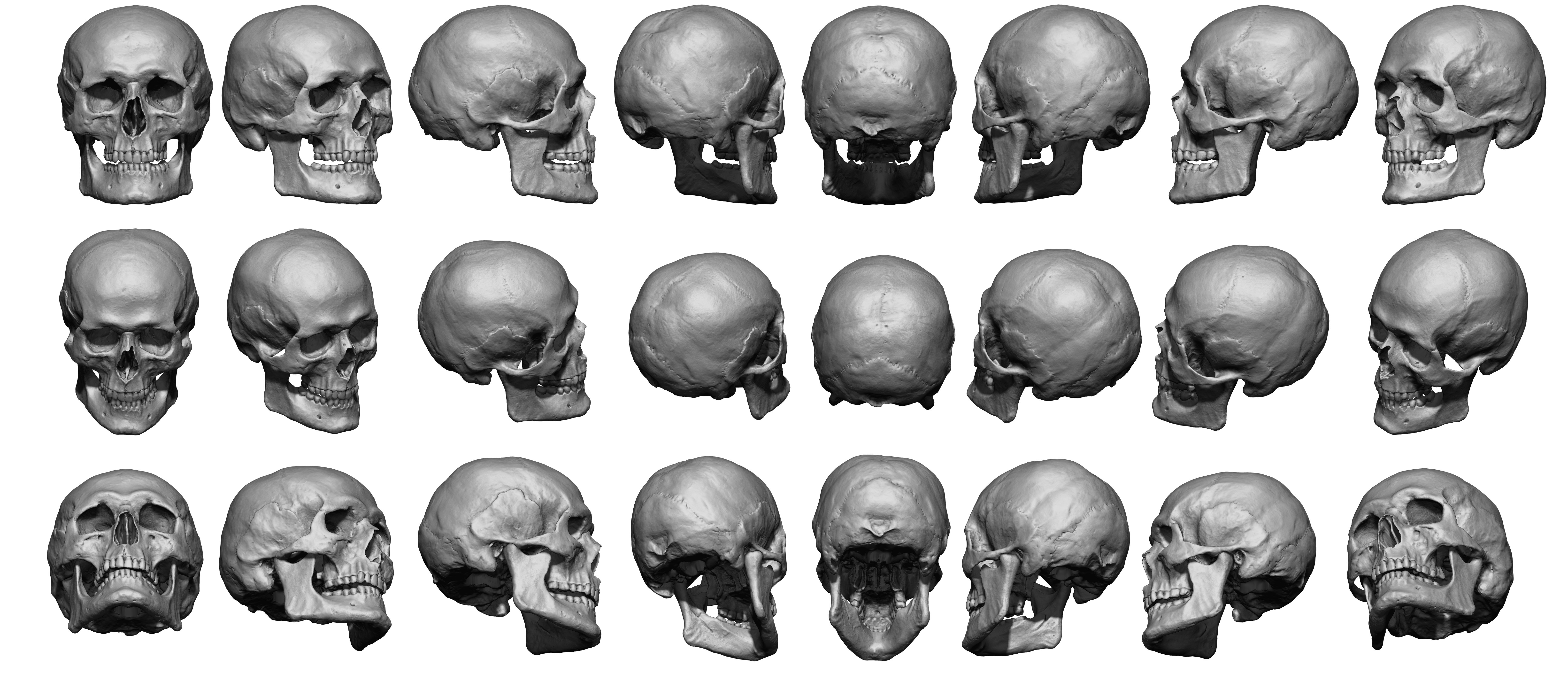 Super High Res Skull Sheet - Anatomy 360