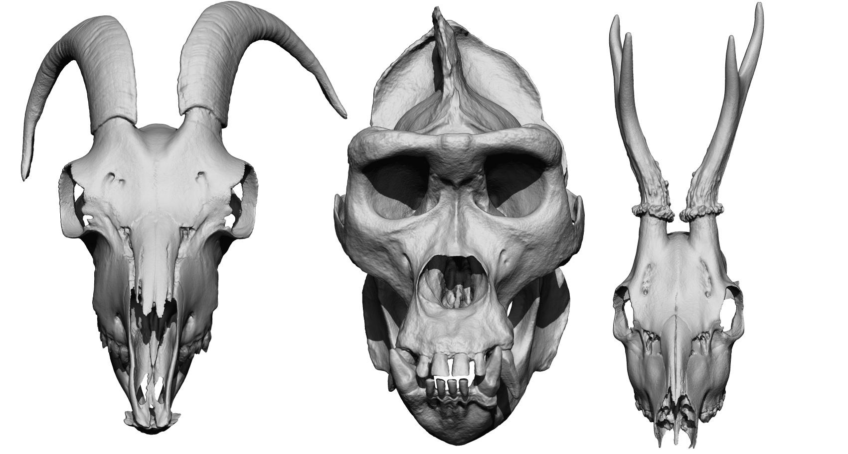 Ausgezeichnet Human Anatomy 3d Free Download Galerie - Anatomie ...