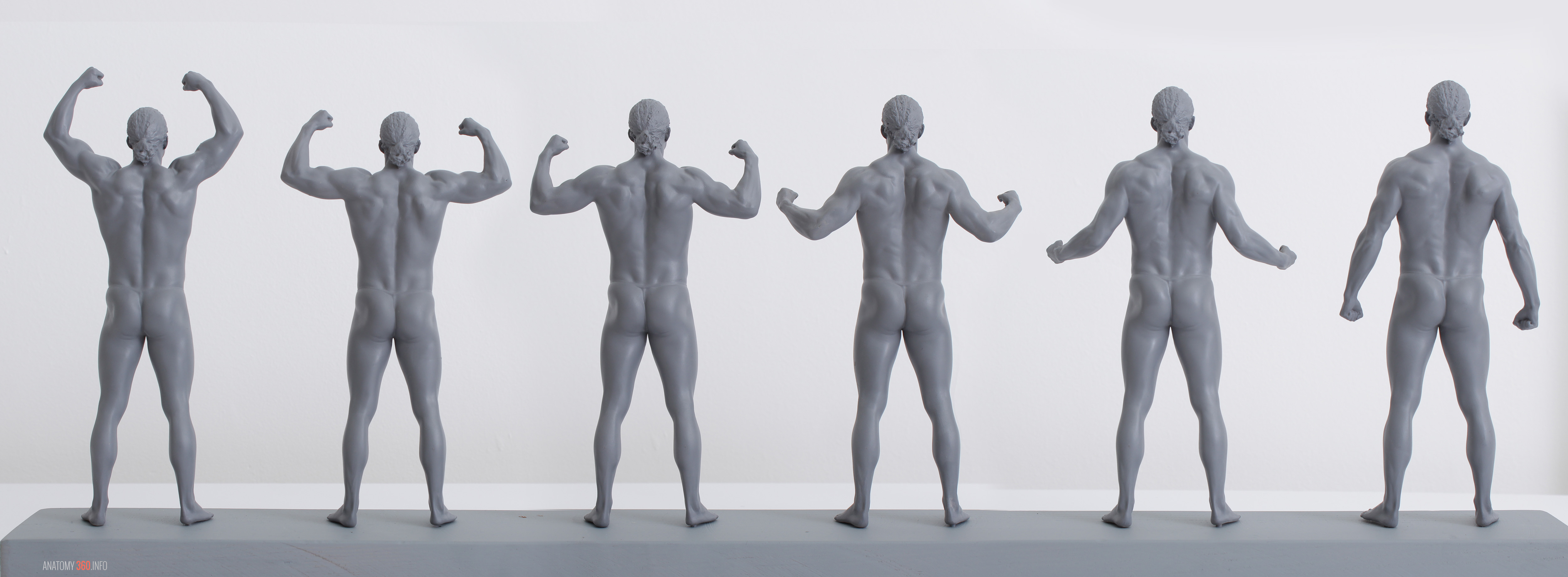 3D printed anatomy in motion | Anatomy 360