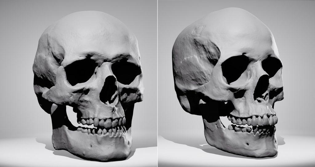 half off ed552 7f5ad Skull Sketcher 2 - Anatomy 360